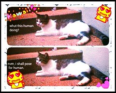 Janin's thoughts (meowtasticparadise) Tags: cute cat pose feline adorable aww neko catpic streamzoo catsconnect