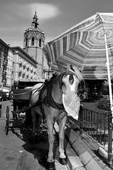 2012-09-20_12198_SP_f038_72 (Maurizio Costanzo - mavik2007) Tags: horse valencia exterior candid flash streetphotography campanile cavallo campanario spagna miguelete ombrellone sb900 it5