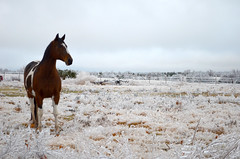 Ho sey (NutMegMae) Tags: winter horses horse snow ice horsey winterscape icesickles