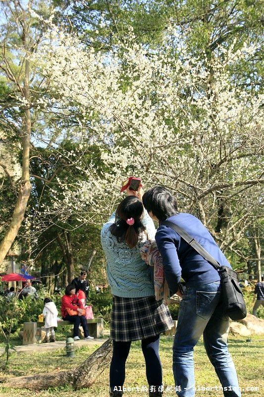 【梅花】桃園復興.角板山公園&蔣公行館