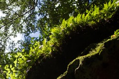 Layer It Up (Universal Stopping Point) Tags: sunlight rock forest moss woods kentucky naturalbridgestatepark
