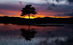kelly hall tarn sunset (Graham - bell) Tags: sunset tree hall kelly common tarn cunbria torver