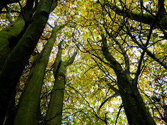 Autumn (eilidhbee94) Tags: autumn nature aberdeen 2012 wonderer autumn2012