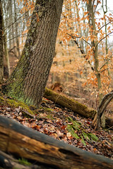 (JLBowers) Tags: winter orange usa mountains green nature colors leaves landscape photography photo moss log woods scenery forrest tennessee ridge 50mmf18 canon1ds jlbowers tretrees