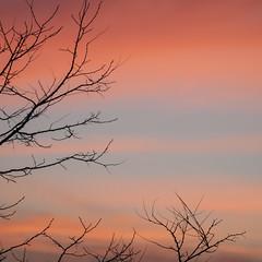 Un coin de ciel * (Titole) Tags: sky morning squareformat branches titole nicolefaton pink friendlychallenges