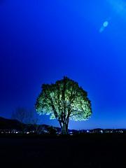 PhoTones Works #8498 (TAKUMA KIMURA) Tags: photones olympus omd em1mark2 takuma kimura 木村 琢磨 landscape nature night scene light up tree silhouette 風景 景色 自然 夜景 夜 ライトアップ 木 樹 シルエット lumecube