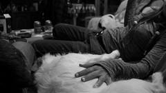 amor interespecífico (pepe amestoy) Tags: blackandwhite people nightphotography alicante spain fujifilm xe1 voigtländer color skopar 421 vm leica m mount