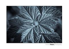 blue metal sheet (Der Zeit die Augenblicke stehlen) Tags: bw deutschland eos700d hth56 blue metal tone