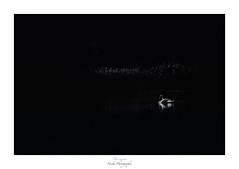 Le lac du cygne (Naska Photographie) Tags: naska photographie photo photographe paysage landscape animaux ancien animalier extérieur cygne oiseau noir et blanc black white bw nb monochrome silhouette minimaliste ombre lumière épuré