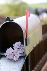 #Hobbyfotografie #Hobbyfotograf #blickwinkel #Blüte #Blume #Frühling #Spring #Canon # rosa (nicolewenzel) Tags: hobbyfotografie hobbyfotograf blickwinkel blüte blume frühling spring canon