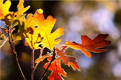 Image8 (Shell Bell Pics) Tags: autumn fall seasons colors nature photography