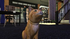 Curious (alexandriabrangwin) Tags: alexandriabrangwin secondlife 3d cgi computer graphics virtual world photography roscoe ginger cat house home funny silly lolcat speak talking listening raised head kitchen afternoon family
