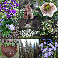 In search of Spring - Webbs Garden Centre, Wychbold, Worcestershire, 19 March 2017 (alanhitchcock49) Tags: mosaic collage webbs garden centre wychbold droitwich bromsgrove worcestershire 19 march 2917 drumstick primula pansies hellebore iron sphere grass hyacinths glory of the snow fire