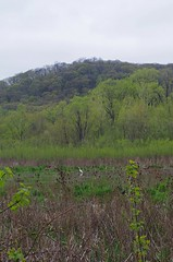 20170430_RushCreek_0044_Edit (holly_bg) Tags: wisconsin wisco wi midwest driftless driftlessregion dog dogs bordercollie bordercollies bluff bluffs swamp bog rushcreek creek river marsh landscape bird birds egret egrets goose geese tree trees forest woods nature naturephotography mushroom mushrooms fungus fungi flower flowers wildflower wildflowers hike hiking outdoors
