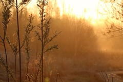 Morning gold!! (RW-V) Tags: canoneos70d canonef100mmf28lmacroisusm beekbergerwoud apeldoorn paysbas thenetherlands niederlande nederland gelderland nature natuur natur fog brouillard nebel nevel dawn morning contrejour 80faves 100faves 120faves 150faves mist 175faves sooc 200faves 225faves 250faves 275faves 300faves