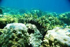 Snorkeling in Coron (Landersz) Tags: philippines filippine coron palawan club paradise snorkeling turtle shark clownfish nemo dugong landersz canon 5dmk3 nimar gopro hero5