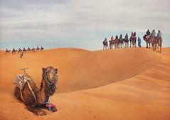 ('J' Jose Maria Perez Nuñez) Tags: merzouga marruecos desierto dromedario camello jmpznz