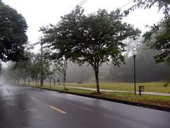 (IgorCamacho) Tags: névoa fog foggy outono autumn southern brasil sul paraná natureza nature perspective perspectiva rua street