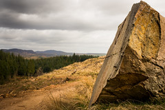 highland rock at the base of Birnam Hill (grahamrobb888) Tags: nikon nikond800 nikkor50mmf18 polarised polariser filter birnamwood birnam perthshire scotland rock rocks forest trees footpath pathway