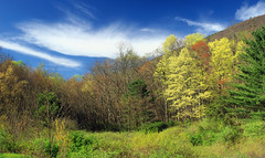 Spring Leaf-Out (1) (Nicholas_T) Tags: pennsylvania clintoncounty waynetownship zindelpark trees forest meadow sky clouds cirrus spring nature creativecommons