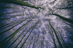 look up (vince_veg3) Tags: trees sight perspektive perspective baum sky clouds himmel
