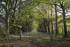 Gateway To Autumn (David Chennell - DavidC.Photography) Tags: brimstage causeway trees autumn gate gateway wirral cheshire