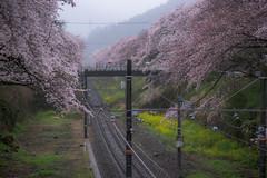 Yamakita (ubic from tokyo) Tags: 85mm cosina ilce7 japan planar planart1485 planart1485zf2 sony sonya7 zf2 carlzeiss