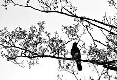 """Baum mit Krähe (torsten hansen (berlin)) Tags: altmoabit2111 torsten hansen berlin wwwdiehansensde wwwtorstenhansenfotografiede """"wwwtorstenhansende"""" licht light malerei painting malen paint lichtmalerei lightpainting """"wwwlightpaintingberlinde"""" """"wwwtorstenhansenschmuckdesignde"""""""