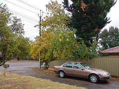 20Apr17  It's finally looking like autumn!  Love the colours!  #photoaday #2017pad #autumn #southaustralia