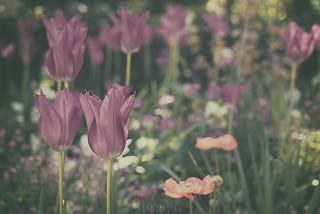 Primavera en Poitiers