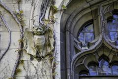 Bat friend! (aerojad) Tags: chicago universityofchicago university vines oldtimey bat bats grotesque windows window windo windowscloseups outdoors