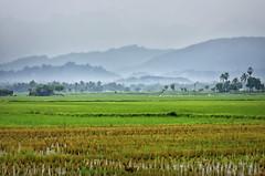 Village Landscape... (aestheticsguy2004) Tags: neeteshphotography landscape india nikon nikonindia villageindia villagelandscape agriculturefield nikonasia travel tenkasi tamilnadu tenkasiindia