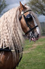 London Harness & Horse Parade 2017: Naughty Boy (pg tips2) Tags: london harness horse parade 2017 lhhp2017 lhhp londonharnesshorseparade harnesshorse equine equines