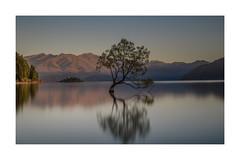 GOOD MORNING 3 (daz672) Tags: nikond600 2485mm newzealand wanakatree wanaka ndfilter firecrestnd16stops lake landscape moringlight