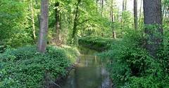 """Der Bach. Die Bäche. Dieser Bach fließt durch einen Wald. Er macht hier eine Biegung (eine Art Kurve). • <a style=""""font-size:0.8em;"""" href=""""http://www.flickr.com/photos/42554185@N00/34324215421/"""" target=""""_blank"""">View on Flickr</a>"""