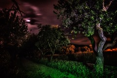 Light painting in the nature (Elisabet Aponte) Tags: ifttt 500px trees color nature night lights colors barcelona noche nit light painting buddhism templo budista lightpanting