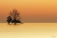 Warm Ending to The Day (peentho266) Tags: trees light sunset sea sky orange cloud seascape tree love beach nature water beauty yellow canon dark landscape flow gold evening nice flickr pretty alone time dusk awesome pd filter lee 7d slowshutter mothernature isolated melaka malacca pantai jerald gnd nd8 rgnd jeraldpinto