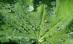 Droplets (Jani Foeldes) Tags: green droplets drops adobe droplet grn sunbeam raindrop nikond600 nikkor105mm28g lightroom4