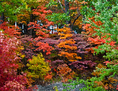 Eureka Autumn (rm2photo) Tags: autumn trees red orange green fall nature leaves stone forest arkansas ozarks bushes eurekasprings