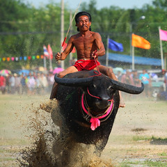 Buffalo racing (sippakornyam) Tags: old travel people motion tourism water car animal sport festival race speed vintage thailand mammal back buffalo october asia cattle bullock mud culture fast competition run banana tourist bull victory retro parade ox event commercial jockey thai winner leader annual behind cart tradition rider bovine sponsor 2012 chonburi