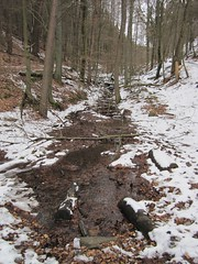Stream (Jeff Coons) Tags: travel forest canon germany deutschland is europe hiking hike powershot hills marburg wandern lahn wander sd940