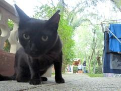 öhrchen (Genista) Tags: animal balearen balearicislands cat holiday insel island katze mallorca mammal mediterranean mittelmeer spain urlaub