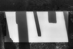 New Project with the Paper from the Abandoned Concrete Plant - at MirrorGround - SpiegelGrund am Steinhof - im Spiegel - in the mirror (hedbavny) Tags: vienna wien autumn shadow reflection art trash fence painting paper found austria mirror sterreich outsiderart gorilla drawing spiegel kunst herbst september cardboard ape artbrut recycling zaun papier schatten spiegelung psychiatrie find fransdewaal karton souvenier affe jugendstil reusing fund ottowagner baumgarten trove penzing jahrhundertwende menschenaffe htteldorf steinhof melancholie primaten verhaltensforscher temporr verhalten achitektur ottowagnerspital naherholungsgebiet amsteinhof spiegelgrund carlovonboog mirrorground hedbavny dibutades entnichtung steinhofermauer ingridhedbavny inventionofdrawing deraffeunddersushimeister kulturellesleben primatenforscher