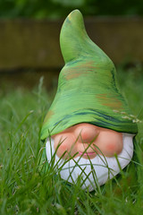 Norris the Pound Shop Gnome (epm photography) Tags: garden gnome