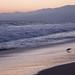 Bird on the Beach at Magic Hour - Santa Monica, California