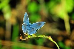 Kalkışa doğru (Atakan Eser) Tags: nature butterfly bug insect version2 kelebek tabiat dsc3419 doğa