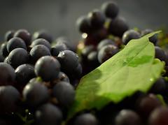gute Ernte (Maike B) Tags: herbst lila blau wein tropfen trauben ernte weinlese weintrauben nikond80