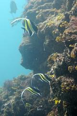 (d3_plus) Tags: sea sky snorkeling freediving izu g12    nikon1 togai hirizo    nakagi canonpowershotg12  flickrandroidapp:filter=none nikon1j1 isw16sh 1nikkor185mmf18 hirizobeach togaibeach