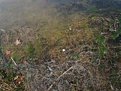 (William Keckler) Tags: autumn green nature water outside october target upskirt manmadelake