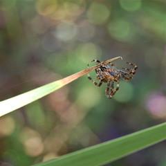 Spider with silken dragline (Emily1957) Tags: spider nikon silk kitlens dragline nikond40